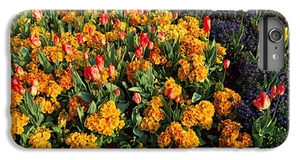 Flowers In Hyde Park, City IPhone 6 Plus Case