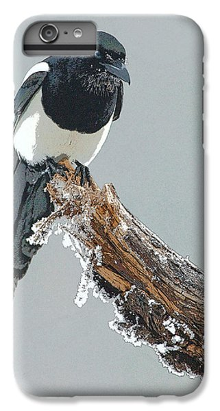 Frosted Magpie- Abstract IPhone 6 Plus Case by Tim Grams