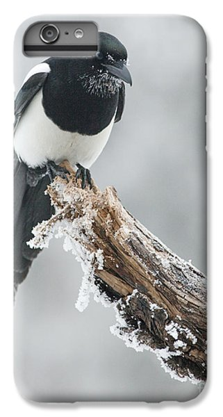 Frosted Magpie IPhone 6 Plus Case by Tim Grams