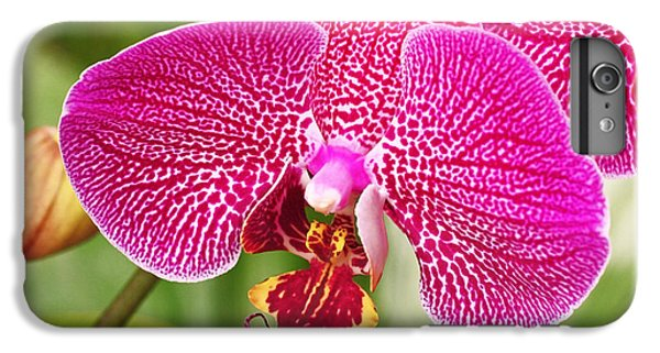 Fuchsia Moth Orchid IPhone 6 Plus Case by Rona Black