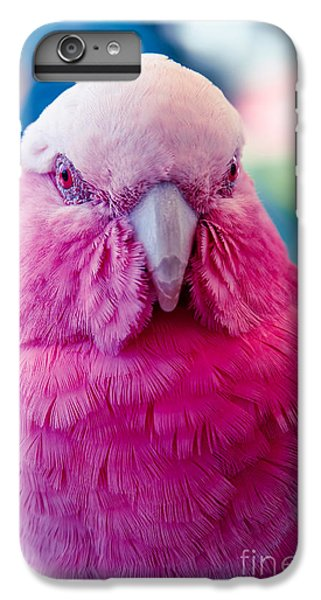 Galah - Eolophus Roseicapilla - Pink And Grey - Roseate Cockatoo Maui Hawaii IPhone 6 Plus Case by Sharon Mau