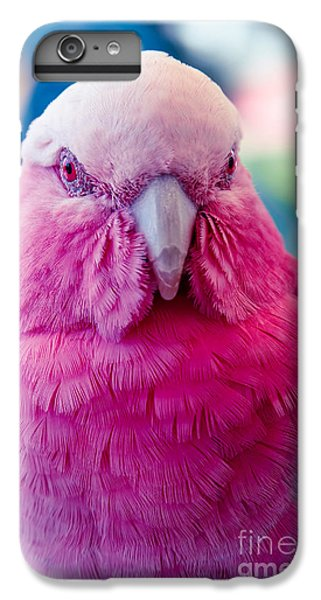 Galah - Eolophus Roseicapilla - Pink And Grey - Roseate Cockatoo Maui Hawaii IPhone 6 Plus Case