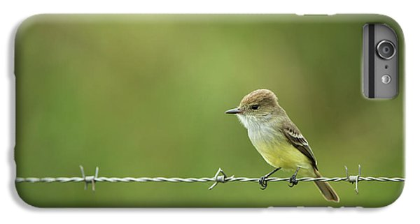 Flycatcher iPhone 6 Plus Case - Galapagos Flycatcher (myiarchus by Pete Oxford