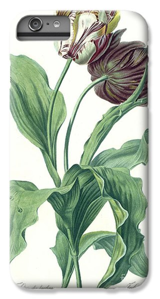 Garden Tulip IPhone 6 Plus Case