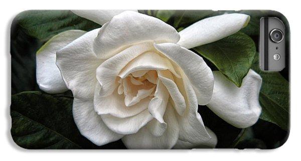 Gardenia IPhone 6 Plus Case by Jessica Jenney