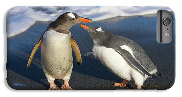 Gentoo Penguin Chick Begging For Food IPhone 6 Plus Case