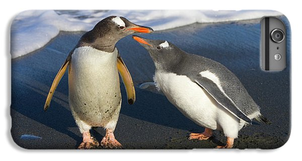 Gentoo Penguin Chick Begging For Food IPhone 6 Plus Case by Yva Momatiuk and John Eastcott