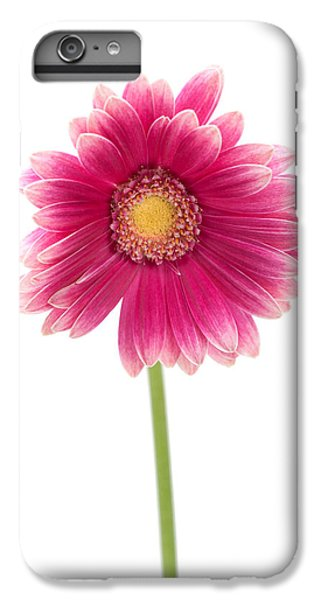 Gerbera IPhone 6 Plus Case by Sebastian Musial