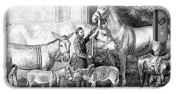 Gigantism And Dwarfism In Farm Animals IPhone 6 Plus Case by Bildagentur-online/tschanz