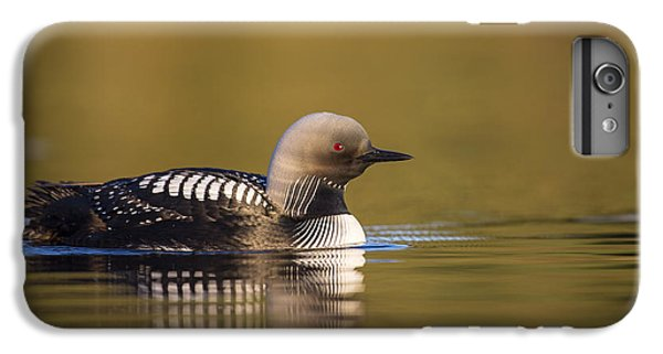 Glassy Waters And A Pacific Loon IPhone 6 Plus Case by Tim Grams