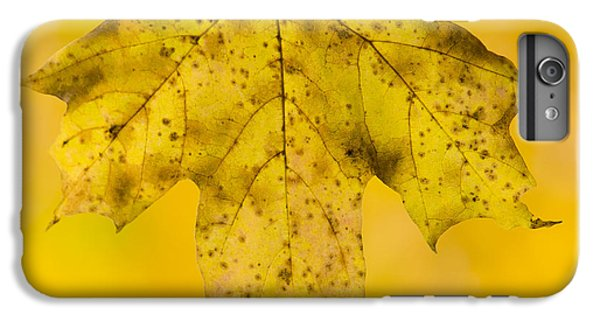 IPhone 6 Plus Case featuring the photograph Golden Maple Leaf by Sebastian Musial