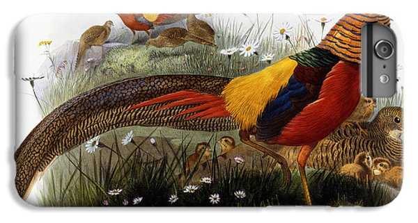 Golden Pheasants IPhone 6 Plus Case by Joseph Wolf