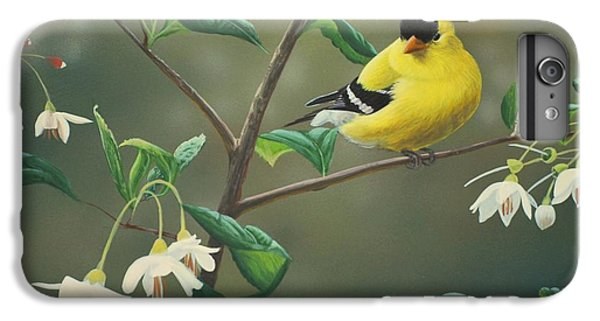 Finch iPhone 6 Plus Case - Goldfinch And Snowbells by Peter Mathios