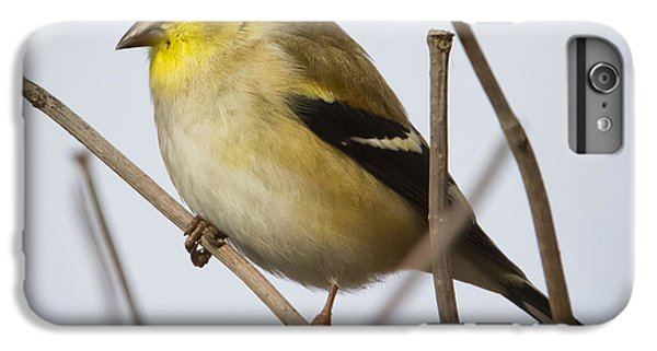 IPhone 6 Plus Case featuring the photograph Goldfinch In It's Winter Coat by Ricky L Jones