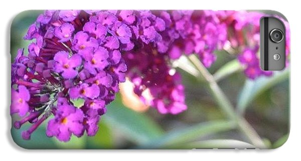 Good Morning Purple Butterfly Bush IPhone 6 Plus Case