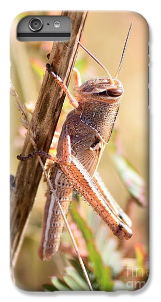 Grasshopper In The Marsh IPhone 6 Plus Case by Carol Groenen