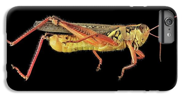 Grasshopper iPhone 6 Plus Case - Grasshopper by Us Geological Survey