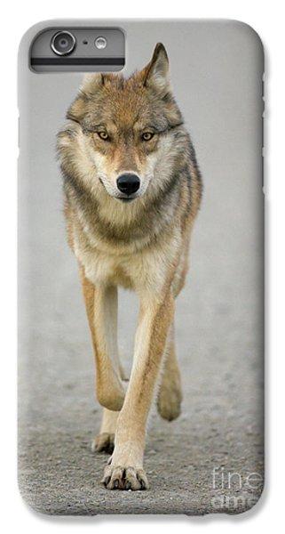 Wolves iPhone 6 Plus Case - Gray Wolf Denali National Park Alaska by Yva Momatiuk John Eastcott