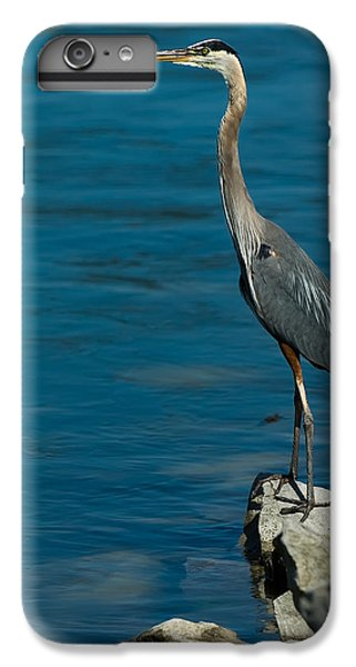Great Blue Heron IPhone 6 Plus Case by Sebastian Musial