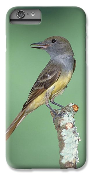 Great Crested Flycatcher Myiarchus IPhone 6 Plus Case