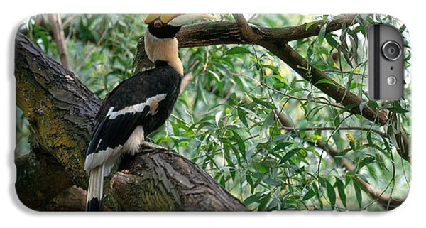 Great Indian Hornbill IPhone 6 Plus Case by Art Wolfe