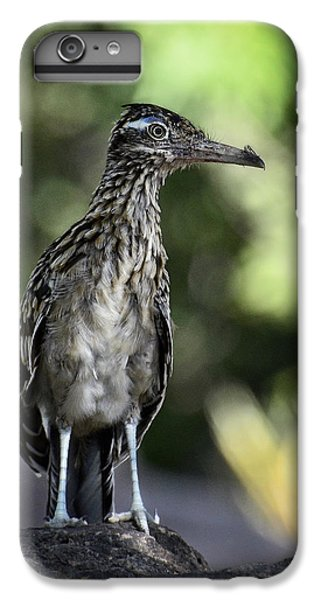 Greater Roadrunner  IPhone 6 Plus Case