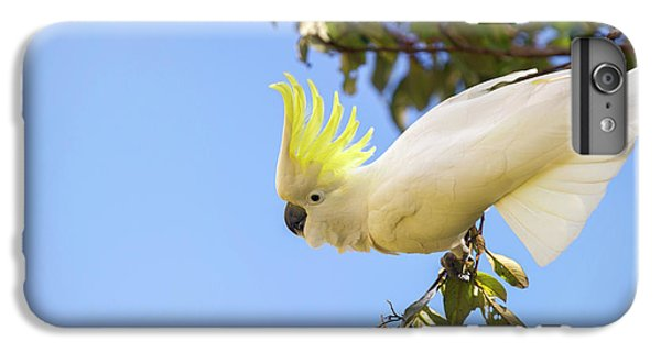 Cockatoo iPhone 6 Plus Case - Greater Sulphur-crested Cockatoo by Louise Murray