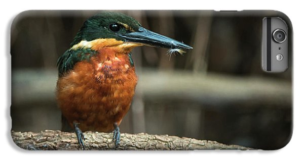 Green And Rufous Kingfisher IPhone 6 Plus Case by Pete Oxford