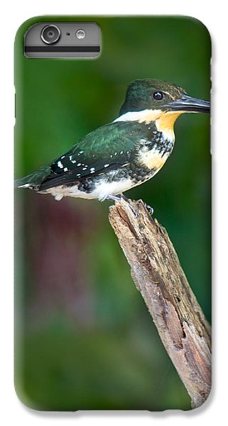 Green Kingfisher Chloroceryle IPhone 6 Plus Case by Panoramic Images