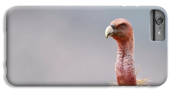 Griffon Vulture IPhone 6 Plus Case by Dr P. Marazzi