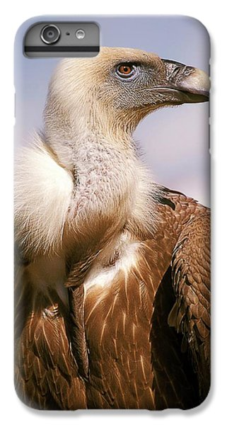 Griffon Vulture (gyps Fulvus) IPhone 6 Plus Case by Photostock-israel