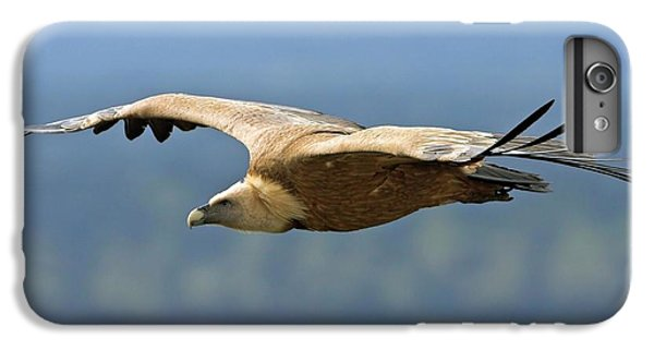 Griffon Vulture In Flight IPhone 6 Plus Case by Bildagentur-online/mcphoto-schaef