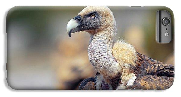 Griffon Vulture IPhone 6 Plus Case by Nicolas Reusens