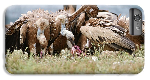 Griffon Vultures Scavenging IPhone 6 Plus Case by Dr P. Marazzi