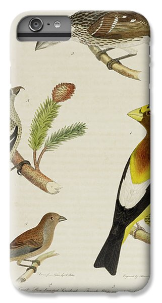 Grosbeak And Crossbill IPhone 6 Plus Case by British Library