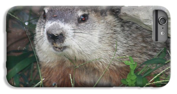 Groundhog iPhone 6 Plus Case - Groundhog Hiding In His Cave by John Telfer