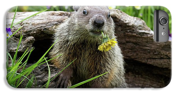 Groundhog  Kit Marmota Monax IPhone 6 Plus Case by Debbie Dicarlo