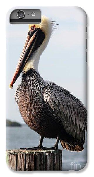 Pelican iPhone 6 Plus Case - Handsome Brown Pelican by Carol Groenen