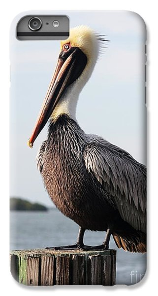 Handsome Brown Pelican IPhone 6 Plus Case by Carol Groenen