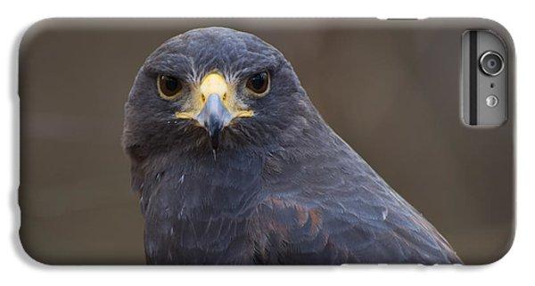 Harris Hawk IPhone 6 Plus Case