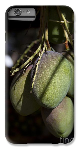 Hawaiian Mango Kihei Maui Hawaii IPhone 6 Plus Case by Sharon Mau
