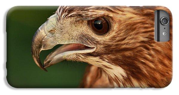 Hawk Eye IPhone 6 Plus Case by Dan Sproul