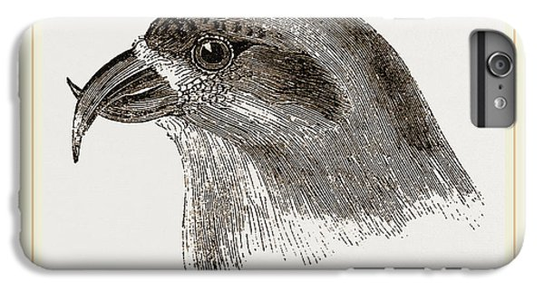 Crossbill iPhone 6 Plus Case - Head Of Crossbill by Litz Collection