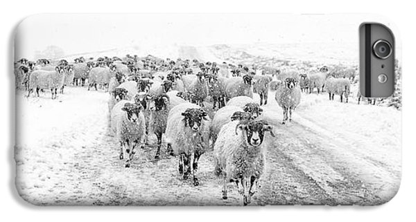 Sheep iPhone 6 Plus Case - Heading For Home by Janet Burdon