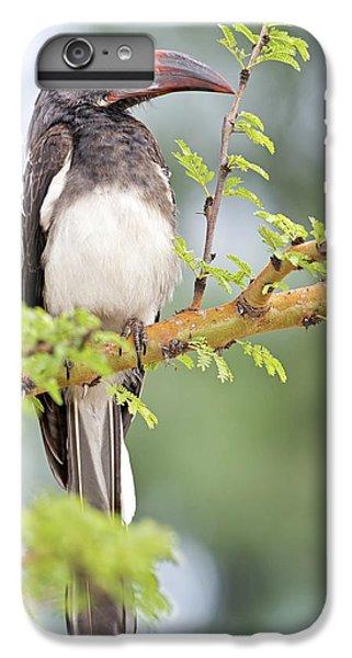 Hemprich's Hornbill IPhone 6 Plus Case