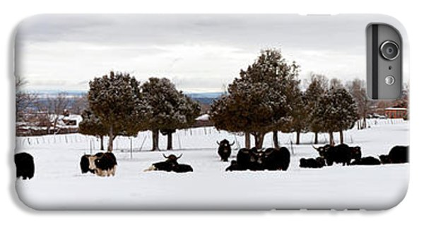Herd Of Yaks Bos Grunniens On Snow IPhone 6 Plus Case