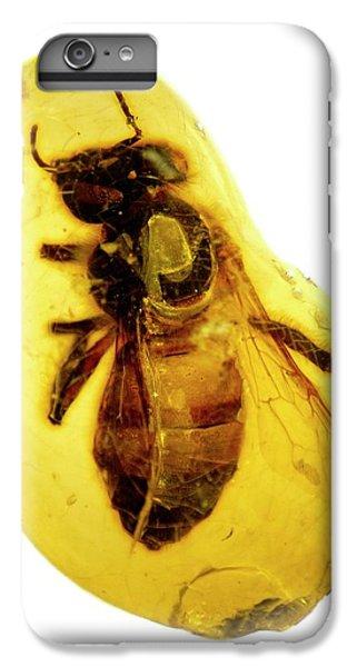 Honeybee iPhone 6 Plus Case - Honeybee In Amber by Natural History Museum, London