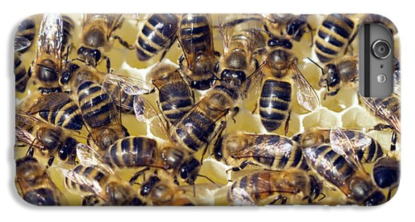 Honeybee iPhone 6 Plus Case - Honeybees On Honeycomb by Simon Fraser/science Photo Library