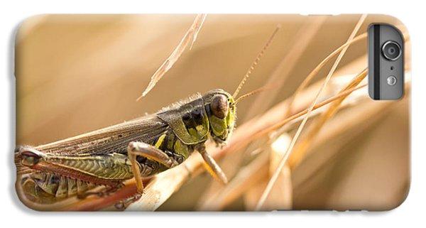 Grasshopper iPhone 6 Plus Case - Hopper In Golden Grass by Shane Holsclaw