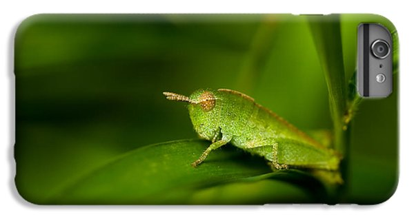 Grasshopper iPhone 6 Plus Case - Hopper by Shane Holsclaw
